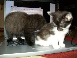 Allie Cat and Macchiato when they were still babies :)