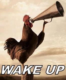 Rooster-Wake-Up