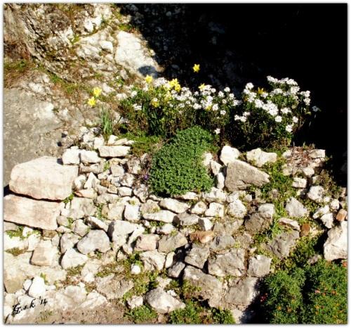 Rock Garden by Bastet