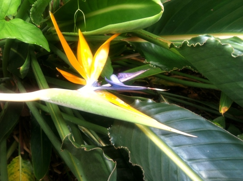 Bird of paradise...one of the only flowers I can identify!  :)