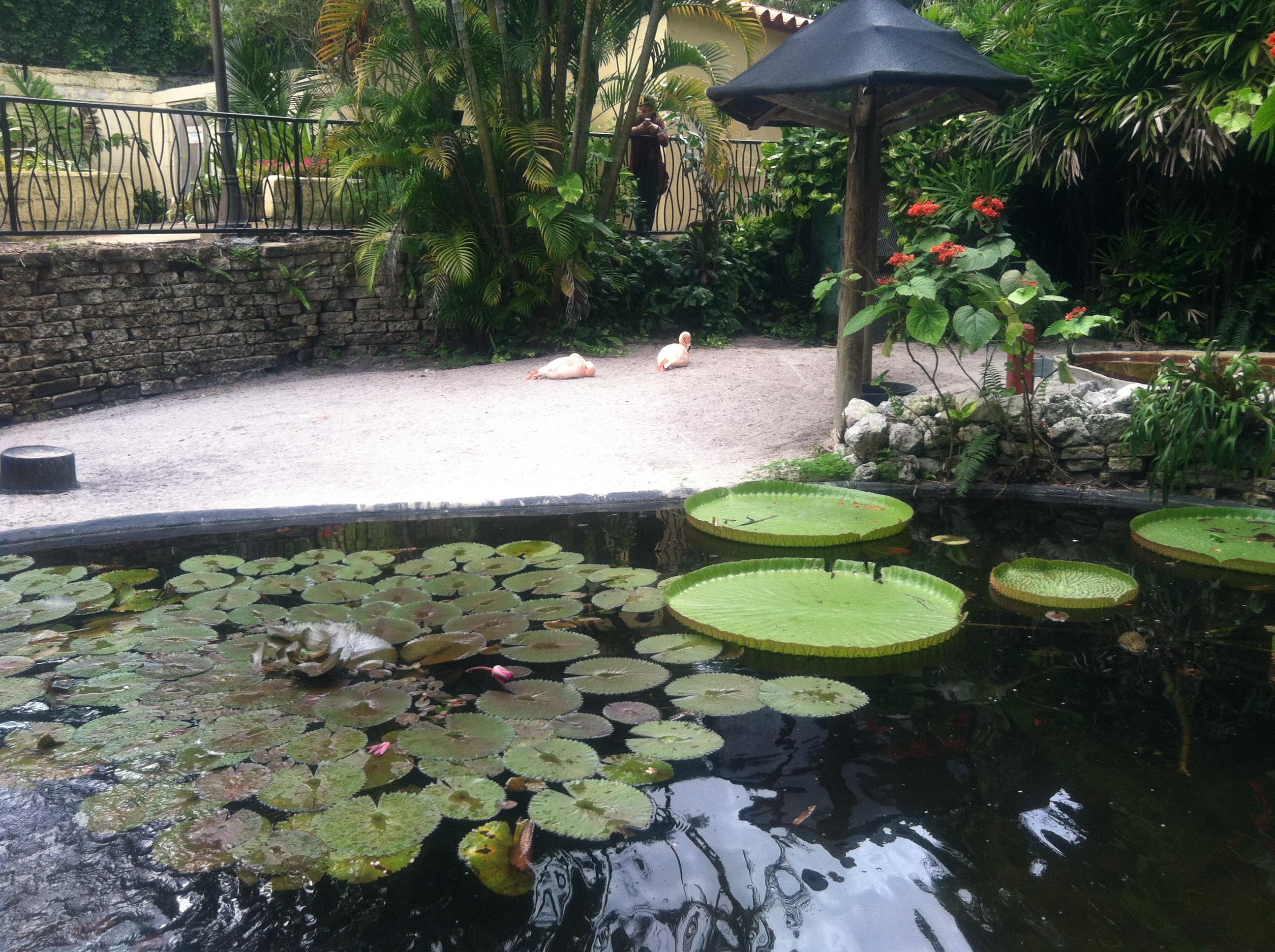 Sunken Garden St Petersburg Fl Birds Of A Feather Wordifull