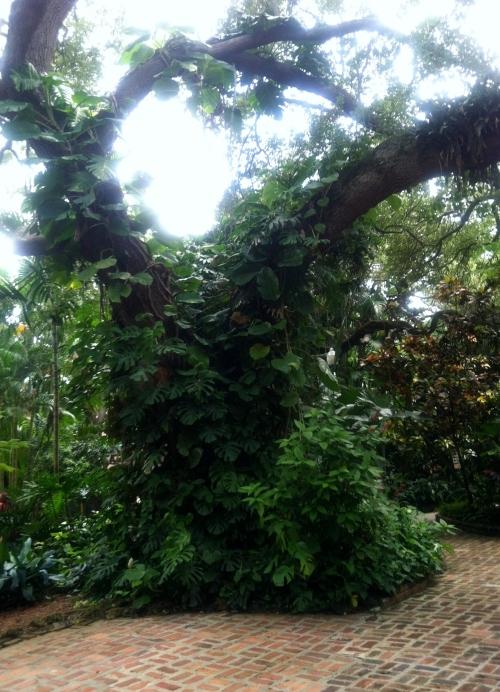 tree _Live Oak