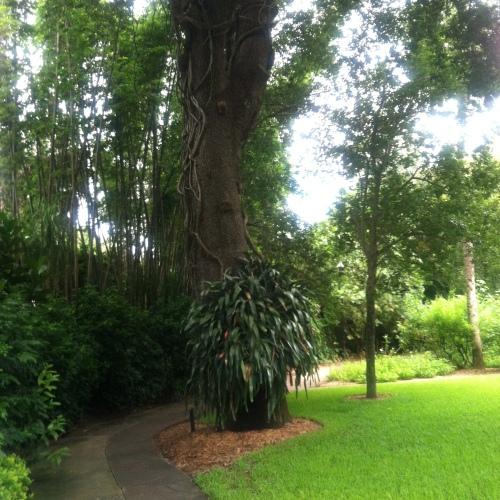 Tree_path